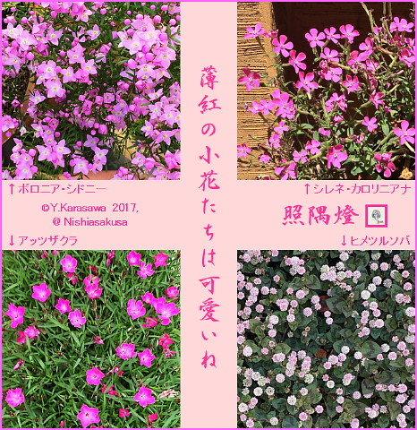 170528ピンクの小花