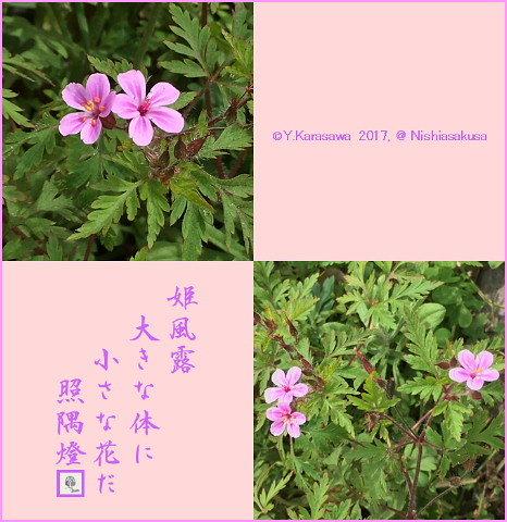 170607姫風露