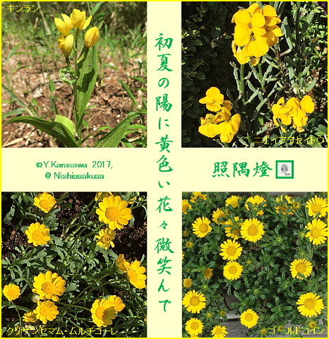 170615黄色い花々