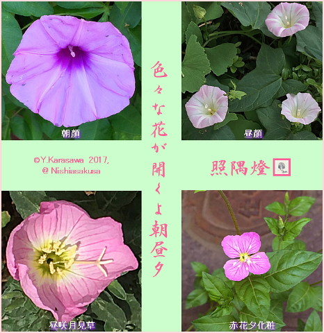 170726朝昼夕の花
