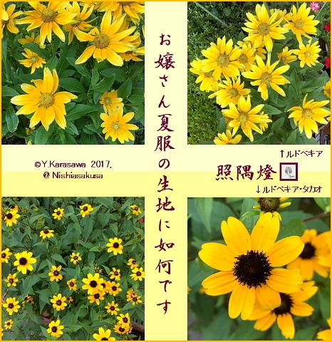 170816フロベキア2種