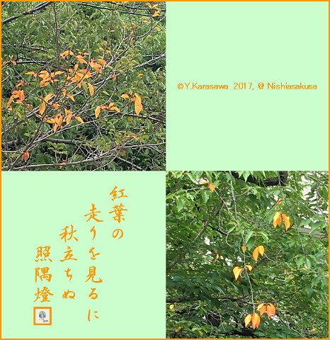 170915桜の部分紅葉