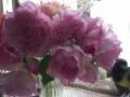 SPAZIOのバラ№7