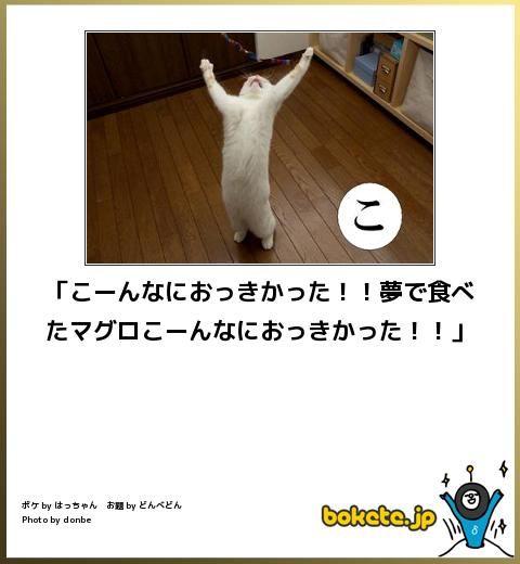 猫の 見た夢