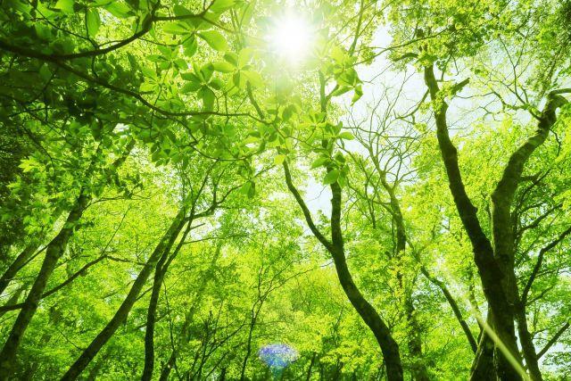 森林 森林浴