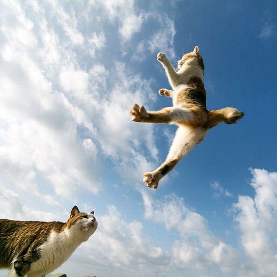飛ぶ ネコ