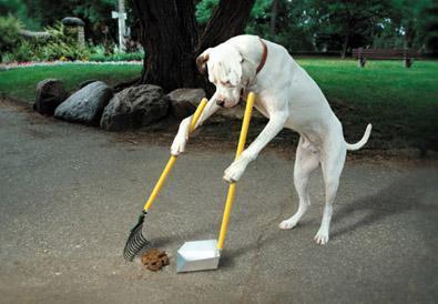 掃除する 犬
