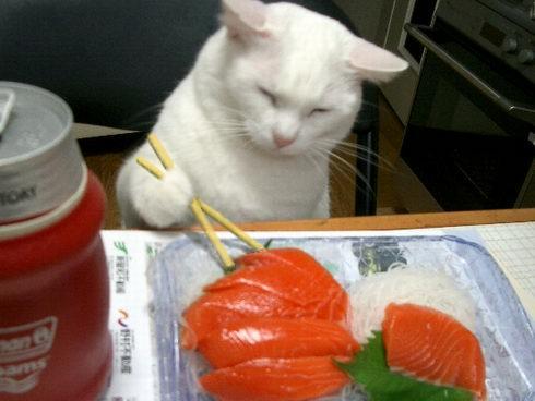 刺身を 食べる ネコ
