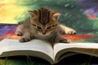 読書する ネコ