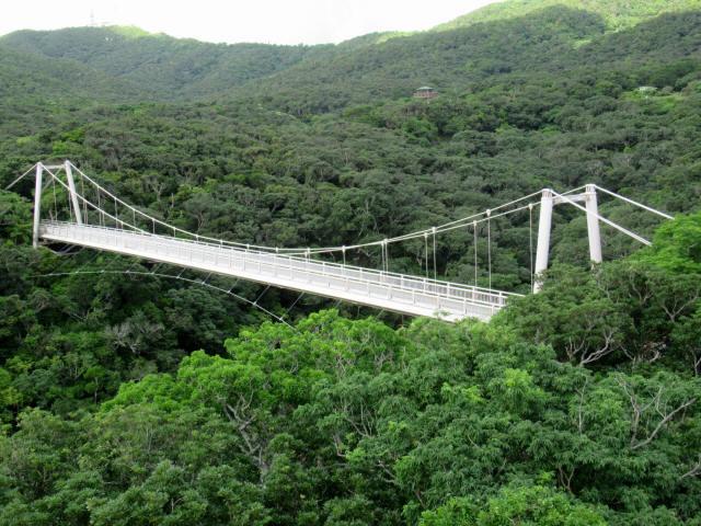 聖紫花の橋9