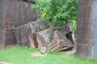 崩れ落ちた橋から木が生えてる170525