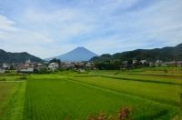 田んぼと富士山170825