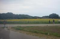 ひまわり畑170826