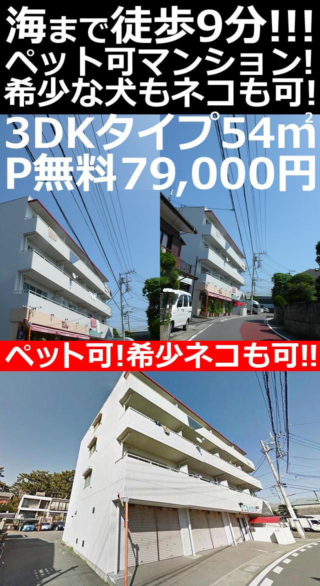 ■物件番号P5044 ペット可マンション!3DKタイプ!ネコも犬も可!海まで5分!P無料7.7万円!