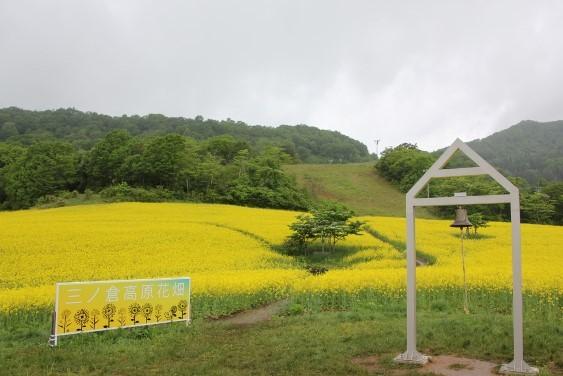 三ノ倉高原 菜の花畑