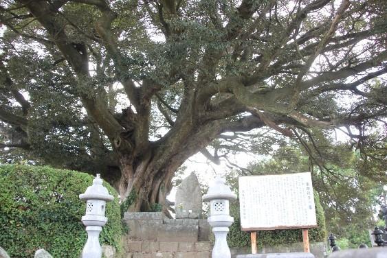 柴田親子の墓とスダジイ