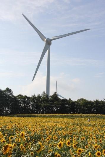 風力発電とひまわり