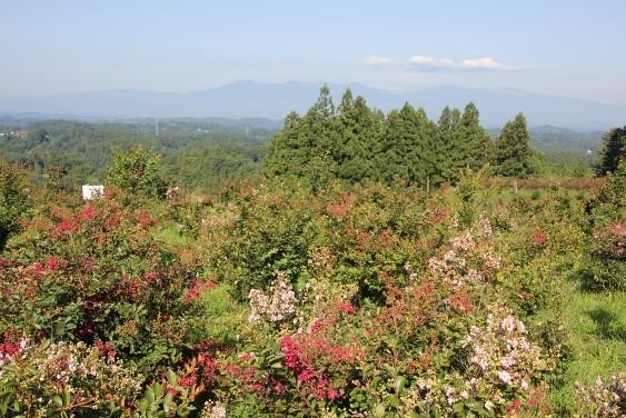 山頂部からの吾妻連峰と安達太良山