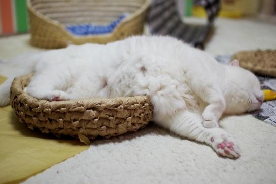 寝てまとうあs^¥d^あsだs