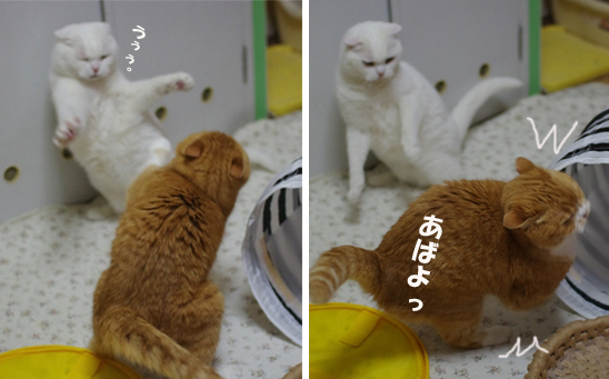 あばよ^^¥だだsdsのコピー
