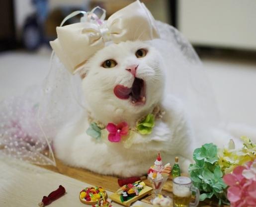 やけ酒のむ花嫁