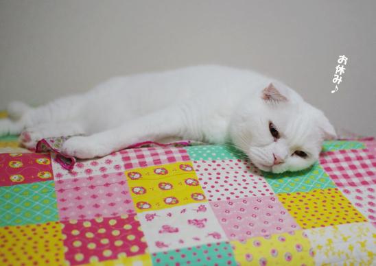 安心したら眠くなったよおやすみ^ssのコピー