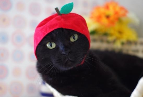 リンゴヴぁsだsd