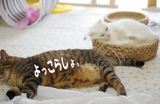 wazatoasdaのコピー