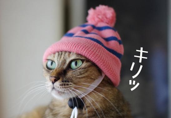 帽子モデル?sdsdのコピー
