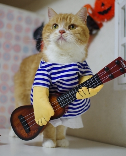 ギターもひける^さあ