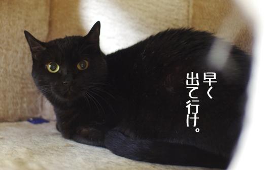 hayaku sa^dasdaのコピー