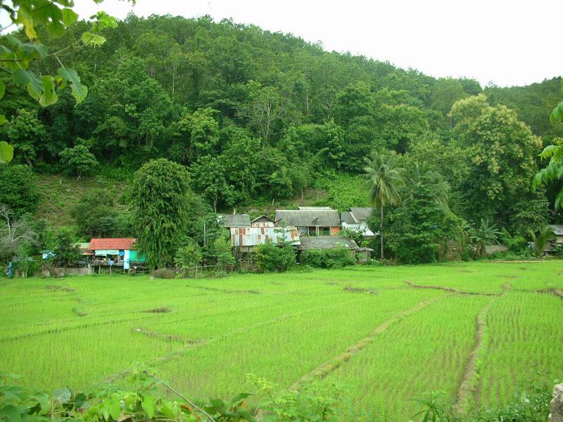 田のある山間風景