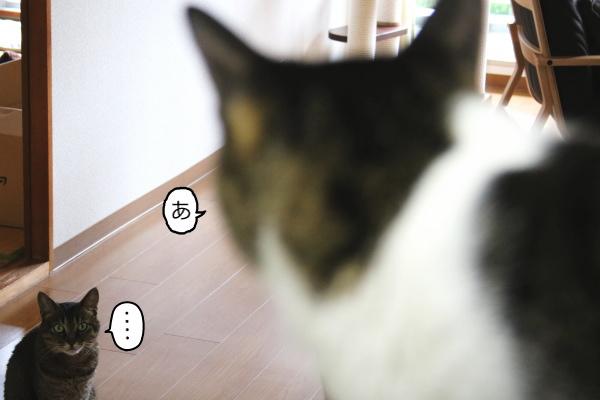 22_253.jpg