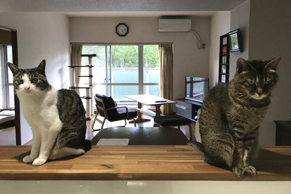 夕餉待二猫図
