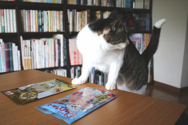 猫の懸案事項