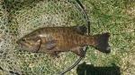 今回の最愛魚45cm
