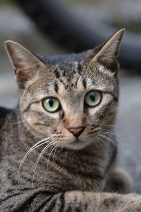 cat0005-001.jpg
