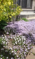 garden0516a.jpg