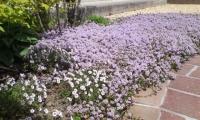 garden0516b.jpg
