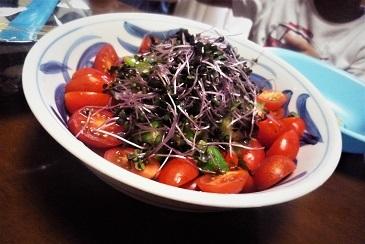 紫キャベツの芽他