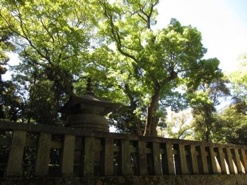 東照宮神廟と金の成る木