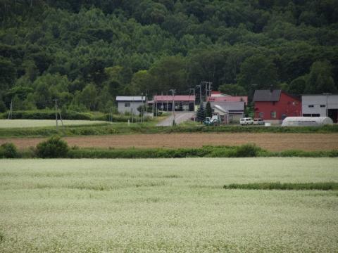 沼牛駅とソバ畑