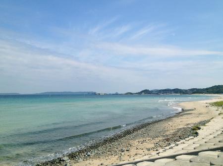 土井ヶ浜のハマユウ