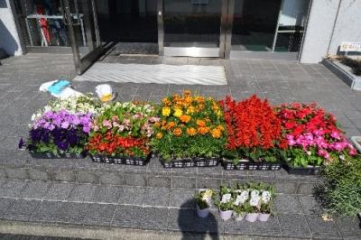 作州津山商工会女性部久米地区花いっぱい運動花壇植え替え津山市花いっぱい運動推進地区