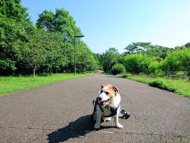 2017長岡公園277