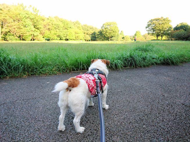 2017長岡公園440