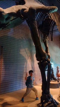 恐竜ホール