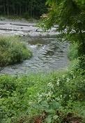 多摩川のせせらぎ