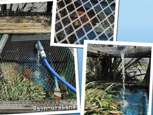 お亀さんの池掃除日和 (^ ^)