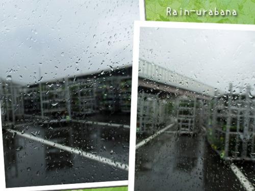 雨で水やり f(^ ^;